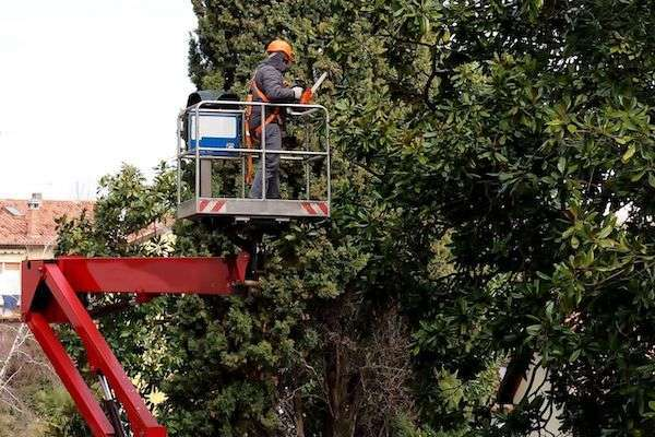 professional hedge trimming business