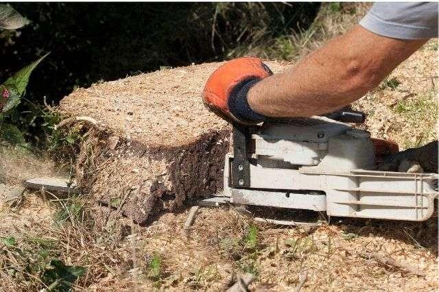stump-grinding-winchester