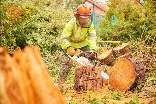 stump-removal-hampshire