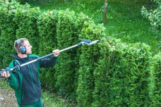 tree-and-hedge-trimming-hampshire