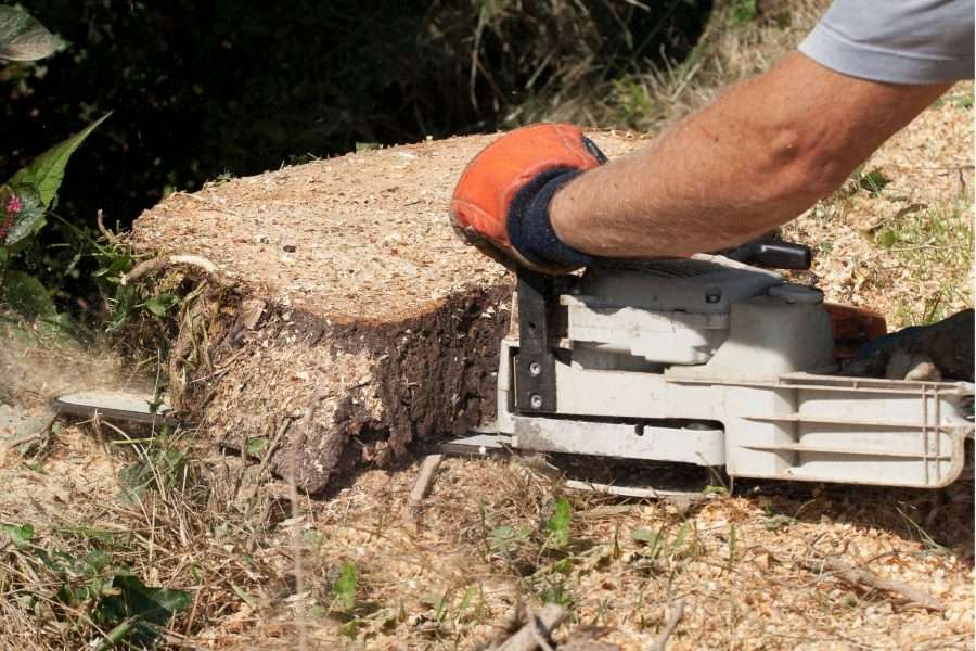 tree felling chainsaw