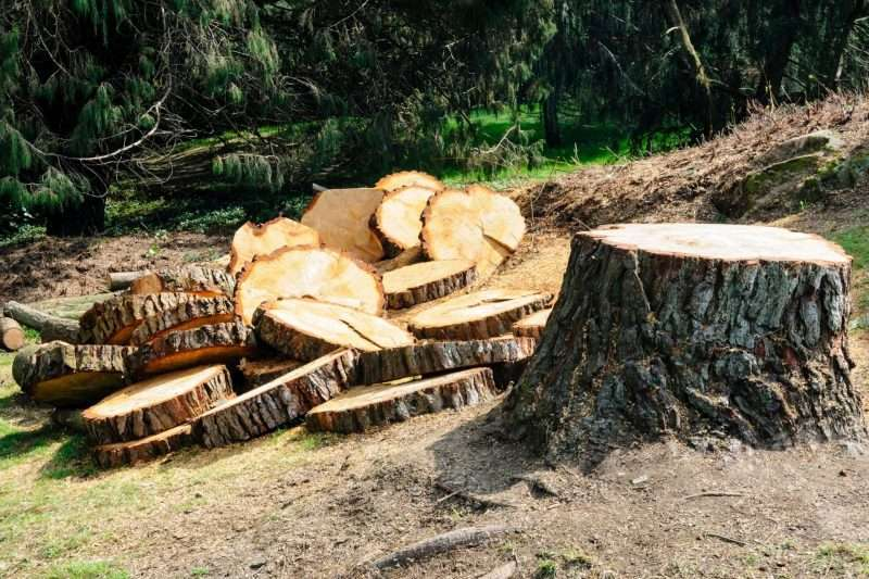 tree felling service winchester
