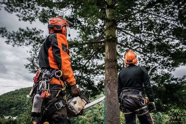 winchester-tree-stump-removal