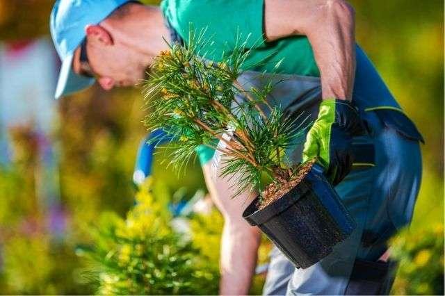Peter Yeates Tree Planting Hampshire