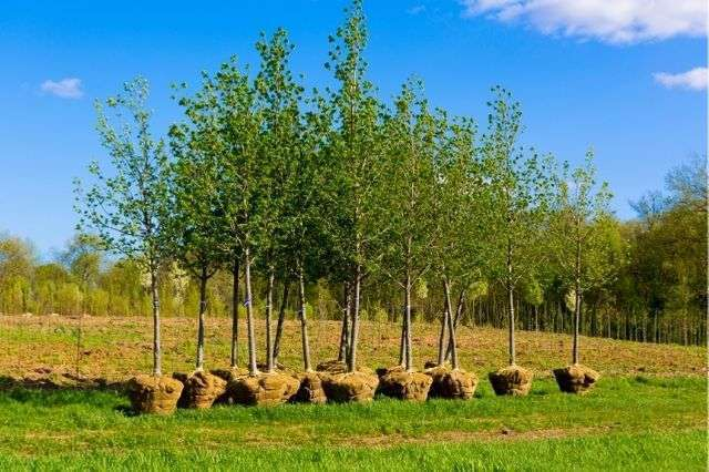 Tree Planting in Winchester Hampshire