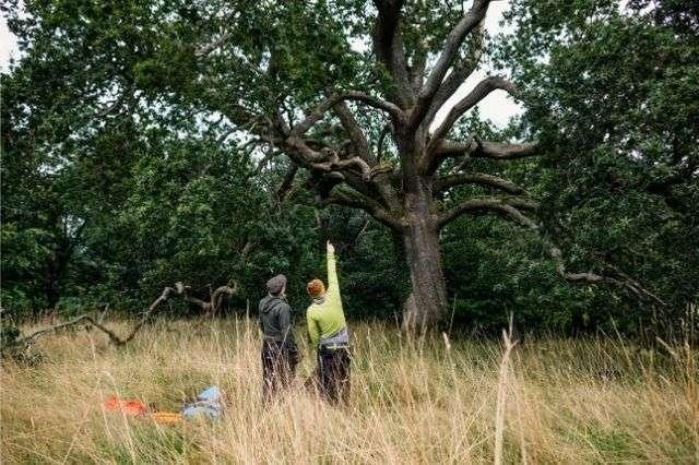 aboricultural-tree-report-hampshire