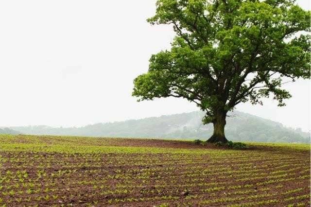 legal-obligations-tree-on-property-winchester