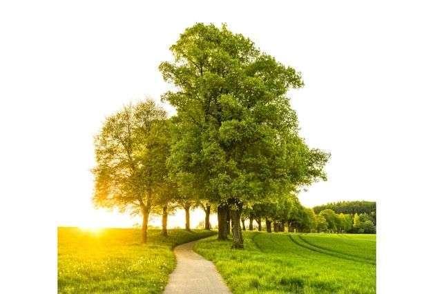 peter-yeates-winchester-oak-tree-surveys