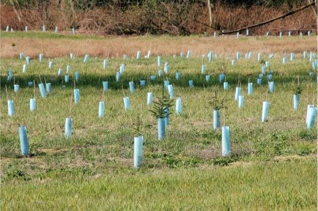 planting-trees-and-hedges