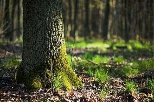 tree-bracing-quote