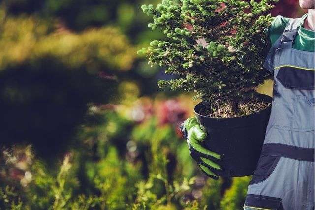 tree planting service Winchester