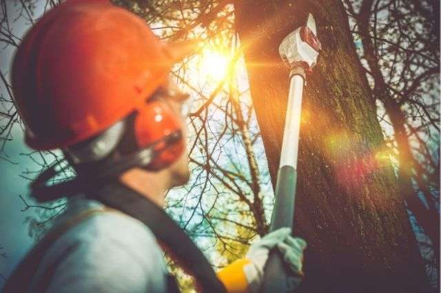 tree-pruning-work-winchester
