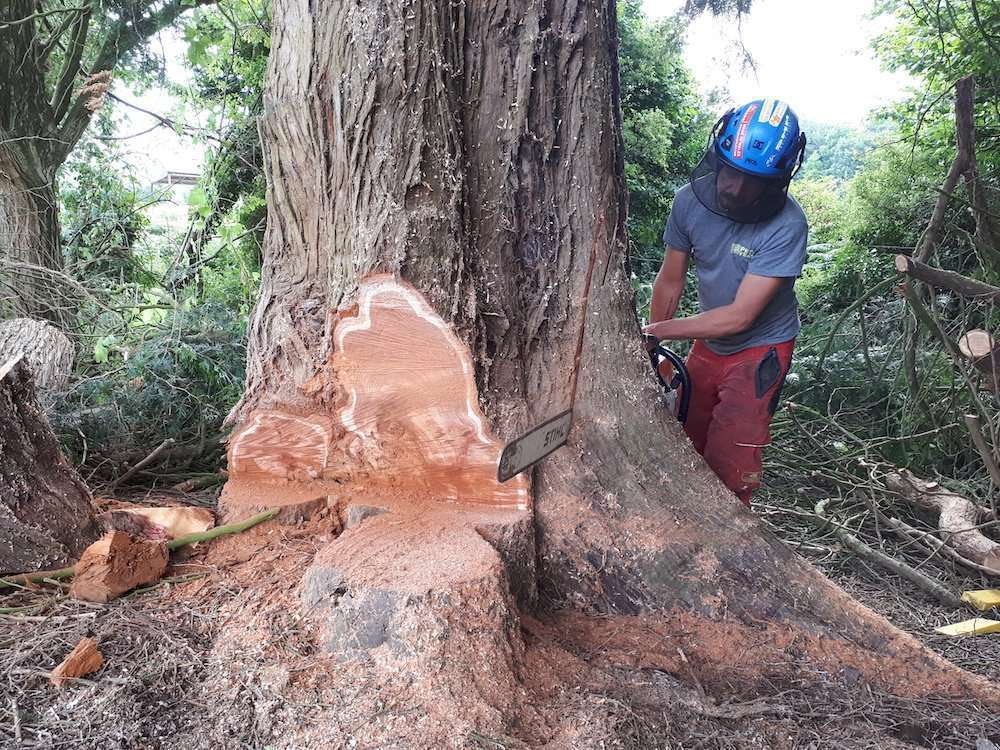 tree surgery in Winchester, Hampshire