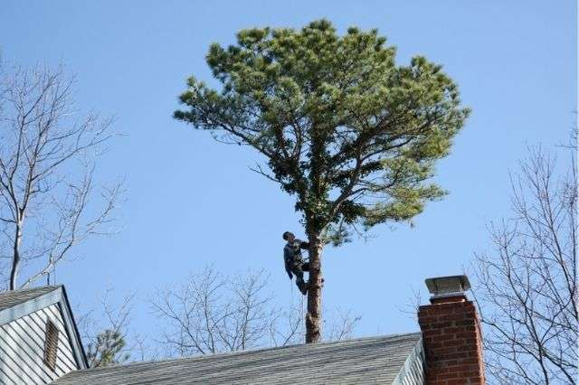 Winchester tree report