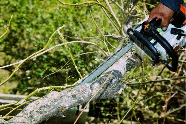winchester-tree-survey-peter-yeates-arb