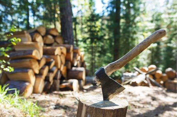 logs-for-firewood