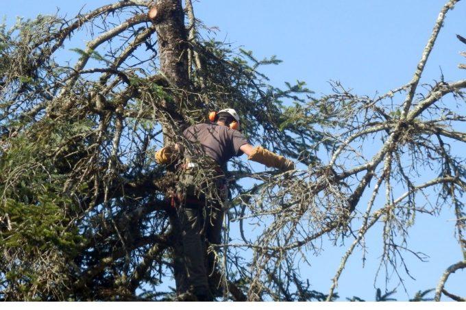 eastleigh-tree-surgeon